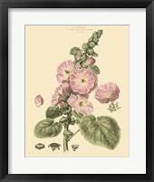 Framed Blushing Pink Florals V