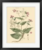 Framed Blushing Pink Florals VII