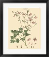 Framed Blushing Pink Florals IX