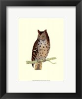 Mottled Owl Framed Print
