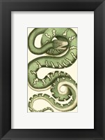 Framed Vibrant Snake I
