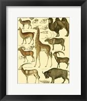 Framed Giraffe & Camel