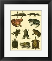 Framed Amphibians