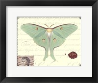 Framed Butterfly Prose VI