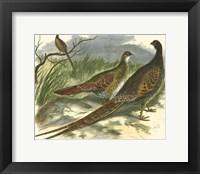 Framed Semmering Pheasant