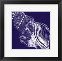 Saturated Shells III Framed Print