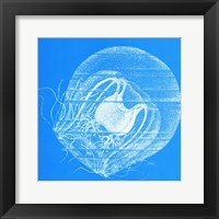 Saturated Sealife IV Framed Print