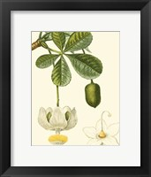 Framed Tropicals II