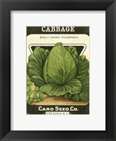Cabbage Framed Print