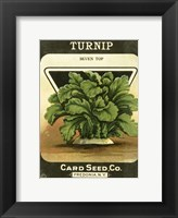 Framed Turnip