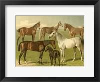Framed Horse Breeds I