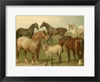 Framed Horse Breeds II