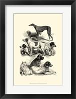 Framed International Show Dogs, 1863  II