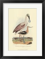 Framed Roseate Spoonbill