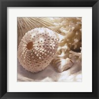 Framed Coral Shell I