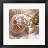 Framed Coral Shell I