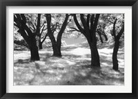 Framed Blue Oaks