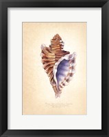 Angular Triton Framed Print