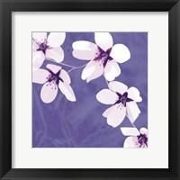 Framed Blossom #1