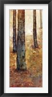 Tranquil Forest I Framed Print
