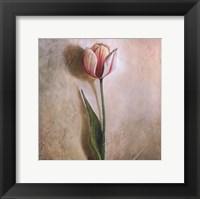 Framed Tulip I