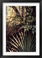 Framed My Jungle II