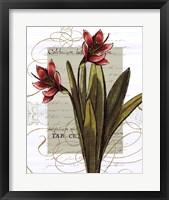 Florilegium III Framed Print