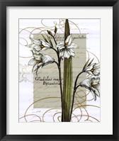 Florilegium IV Framed Print