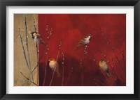 Framed Sparrows in Willow