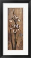 Floral Grace II Framed Print