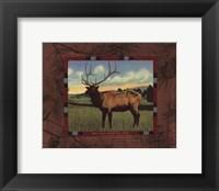 Framed Elk I