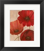 Framed Poppy Trio II