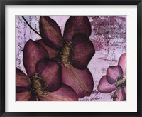 Pressed Flowers II Framed Print
