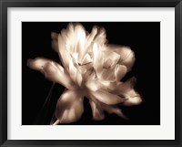 Double Dappled II Framed Print