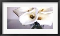 Springplicity II Framed Print