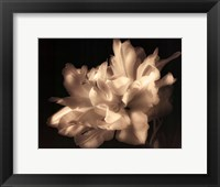 Framed Double Dappled I
