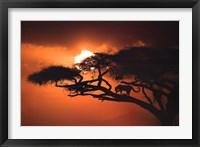Framed African Sky II