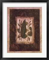 Framed Leaf Study I