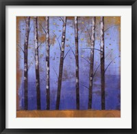 Birch Trees II Framed Print