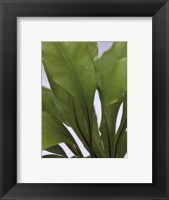 Fresh Green Framed Print