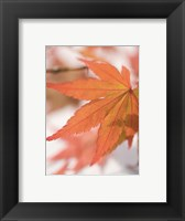 Red Leafs Framed Print