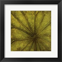 Palm Green Framed Print