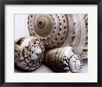 Framed Shell Collage