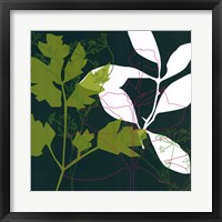 Framed Green Leaf Shadow