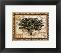 Framed East Indies Palm