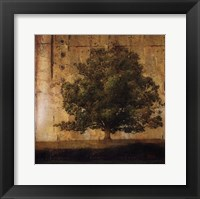 Aged Tree I Framed Print