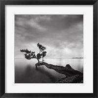 Framed Water Tree