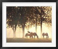 Framed Horses in the Mist