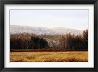 Framed November Hedgerow