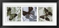 Framed Meadow Triptych